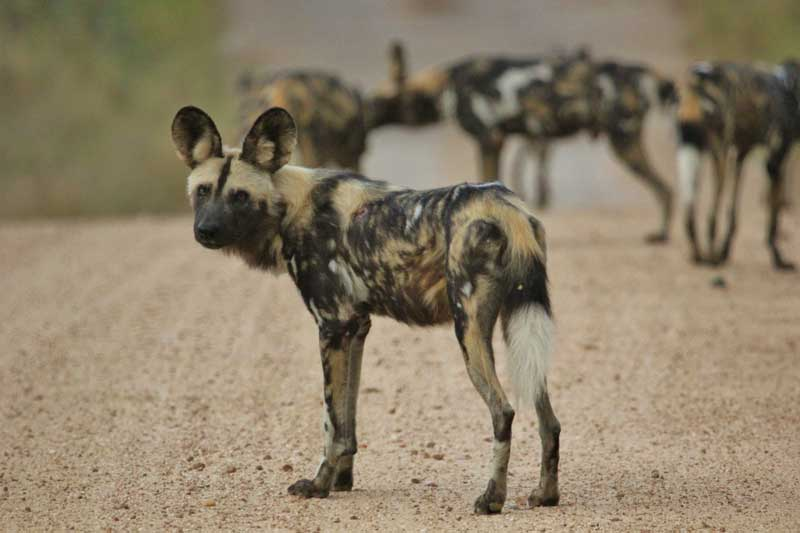 Kruger National Park The African Ivory Route