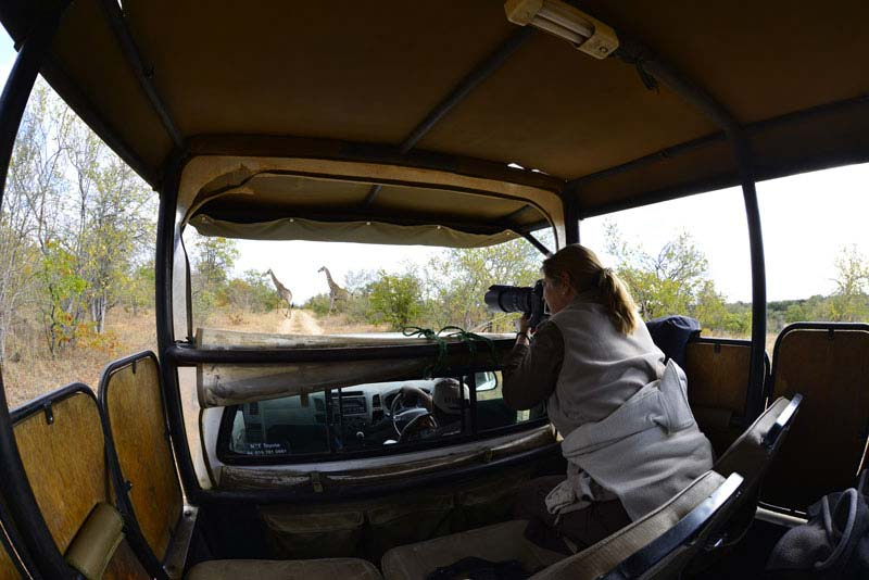 game drive letaba ranch